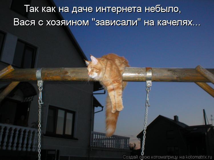 """Котоматрица: Так как на даче интернета небыло, Вася с хозяином """"зависали"""" на качелях..."""