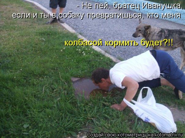 Котоматрица: - Не пей, братец Иванушка, если и ты в собаку превратишься, кто меня колбасой кормить будет?!!