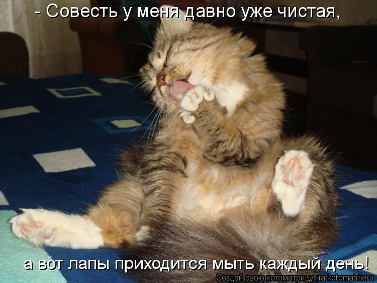 Котоматрица: а вот лапы приходится мыть каждый день! - Совесть у меня давно уже чистая,