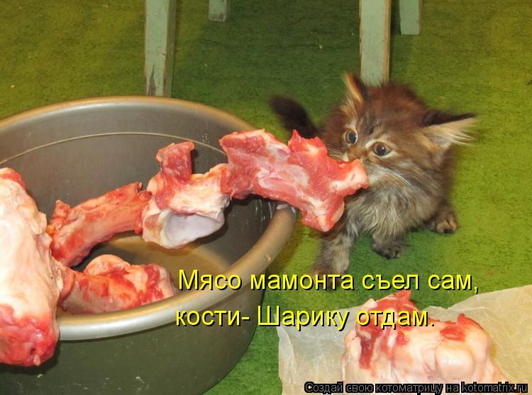 Котоматрица: Мясо мамонта съел сам, кости- Шарику отдам.