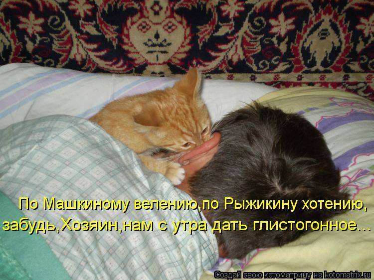 Котоматрица: По Машкиному велению,по Рыжикину хотению, забудь,Хозяин,нам с утра дать глистогонное...