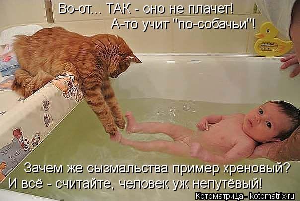 """Котоматрица: А-то учит """"по-собачьи""""! Зачем же сызмальства пример хреновый? Во-от... ТАК - оно не плачет! И всё - считайте, человек уж непутёвый!"""