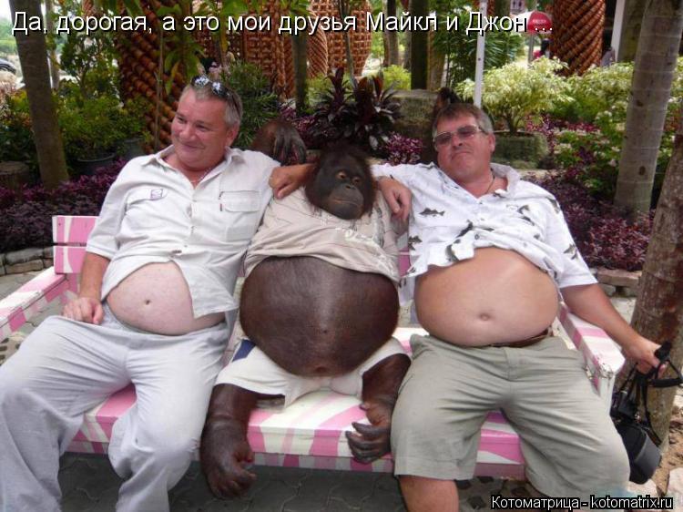 Котоматрица: Да, дорогая, а это мои друзья Майкл и Джон ...