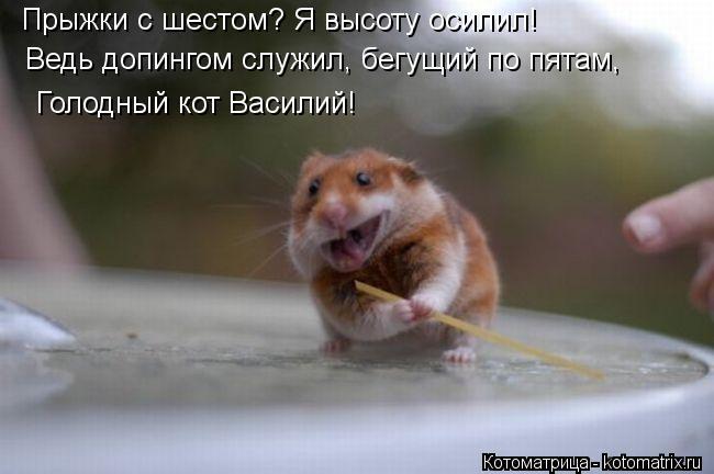 Котоматрица: Прыжки с шестом? Я высоту осилил! Ведь допингом служил, бегущий по пятам, Голодный кот Василий!