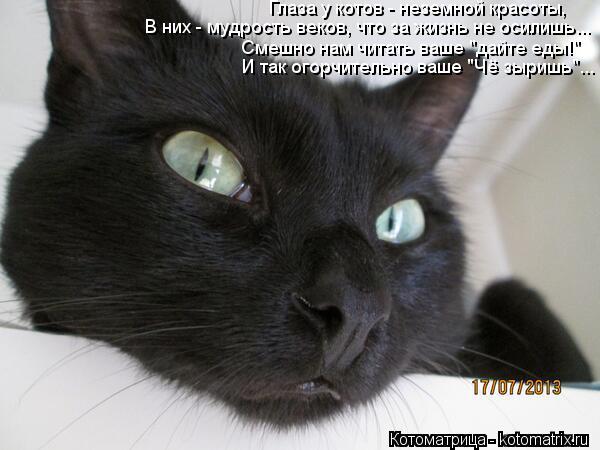 """Котоматрица: Глаза у котов - неземной красоты, В них - мудрость веков, что за жизнь не осилишь... Смешно нам читать ваше """"дайте еды!"""" И так огорчительно ваше """""""