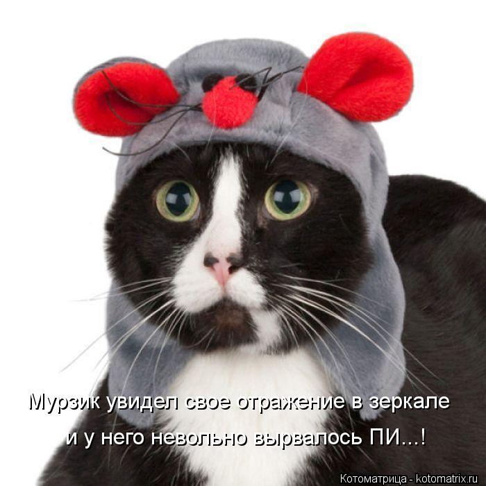 Котоматрица: Мурзик увидел свое отражение в зеркале и у него невольно вырвалось ПИ...!