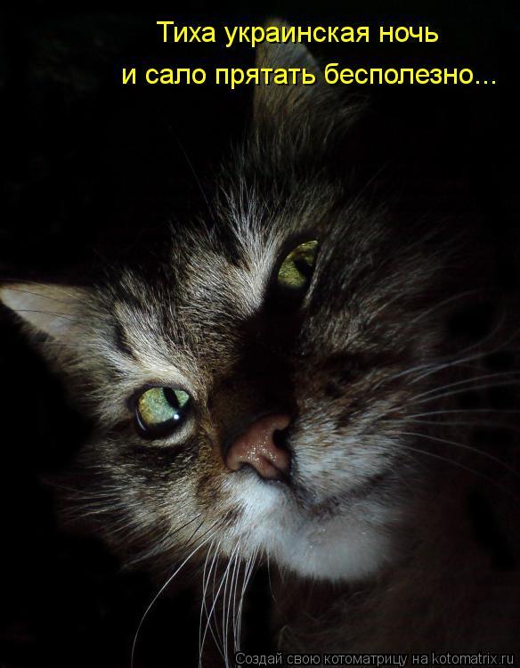 Котоматрица: Тиха украинская ночь  и сало прятать бесполезно...