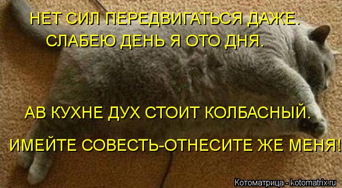 Котоматрица: НЕТ СИЛ ПЕРЕДВИГАТЬСЯ ДАЖЕ. СЛАБЕЮ ДЕНЬ Я ОТО ДНЯ. АВ КУХНЕ ДУХ СТОИТ КОЛБАСНЫЙ. ИМЕЙТЕ СОВЕСТЬ-ОТНЕСИТЕ ЖЕ МЕНЯ!!!