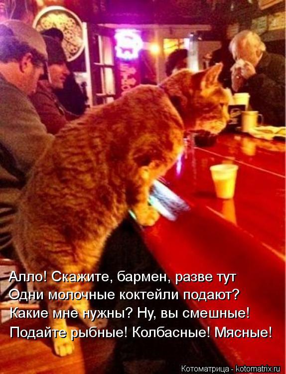 Котоматрица: Алло! Скажите, бармен, разве тут Одни молочные коктейли подают? Какие мне нужны? Ну, вы смешные! Подайте рыбные! Колбасные! Мясные!