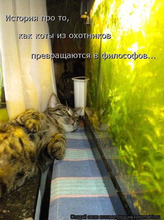 Котоматрица: как коты из охотников История про то,  превращаются в философов...