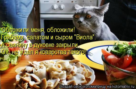 """Котоматрица: Обложили меня, обложили! Грибами, салатом и сыром """"Виола"""". А свинину в духовке закрыли. Ох, не ждал я коварства такого!"""