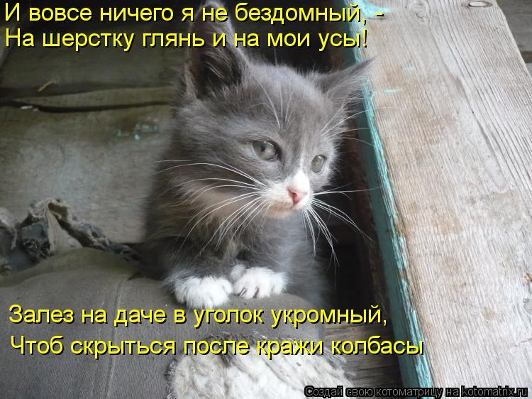 Котоматрица: И вовсе ничего я не бездомный, - На шерстку глянь и на мои усы! Залез на даче в уголок укромный, Чтоб скрыться после кражи колбасы