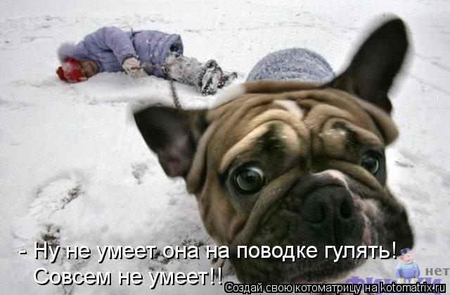 Котоматрица: - Ну не умеет она на поводке гулять! Совсем не умеет!!