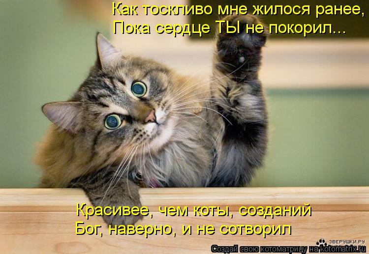 Котоматрица: Как тоскливо мне жилося ранее,  Пока сердце ТЫ не покорил... Красивее, чем коты, созданий Бог, наверно, и не сотворил