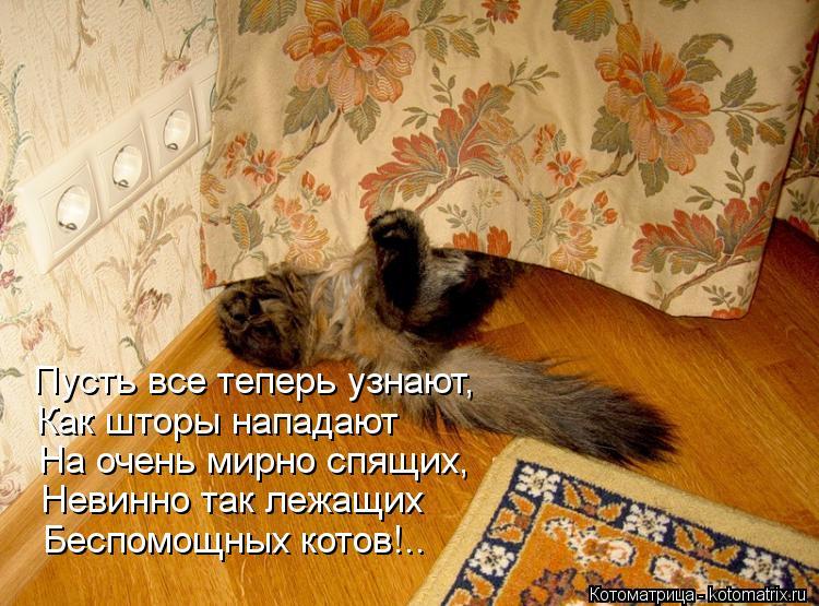 Котоматрица: Пусть все теперь узнают, Как шторы нападают На очень мирно спящих, Невинно так лежащих Беспомощных котов!..