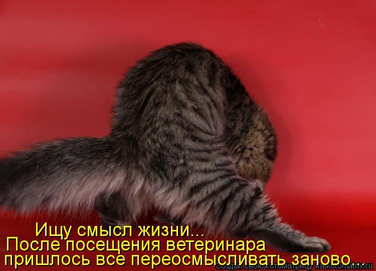 Котоматрица: Ищу смысл жизни... После посещения ветеринара  пришлось все переосмысливать заново...