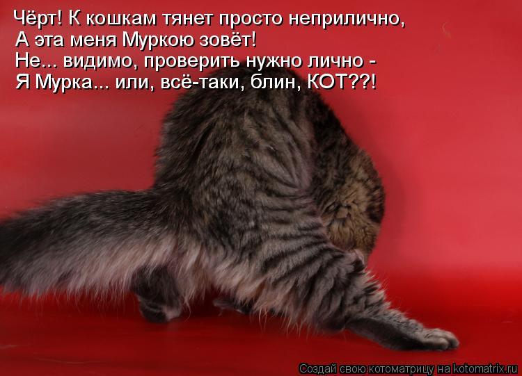 Котоматрица: Чёрт! К кошкам тянет просто неприлично,  А эта меня Муркою зовёт! Не... видимо, проверить нужно лично - Я Мурка... или, всё-таки, блин, КОТ??! Я Мурк