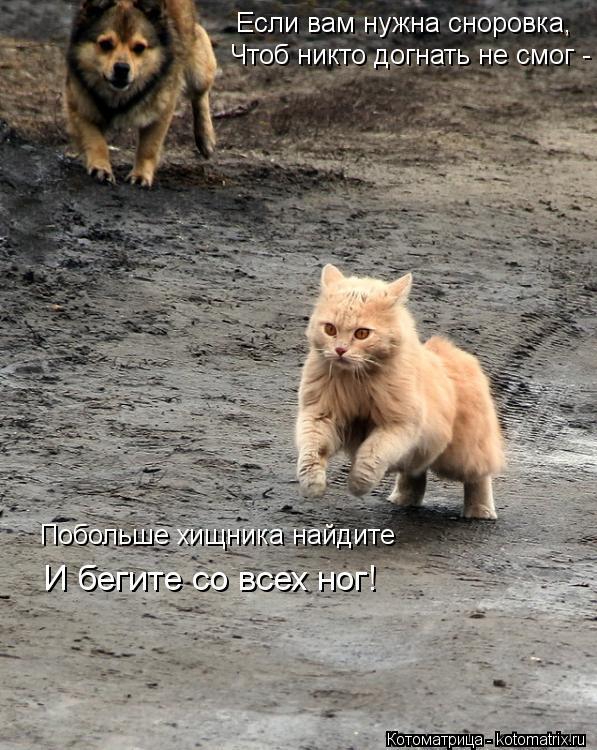 Котоматрица: Если вам нужна сноровка, Чтоб никто догнать не смог - Побольше хищника найдите И бегите со всех ног!
