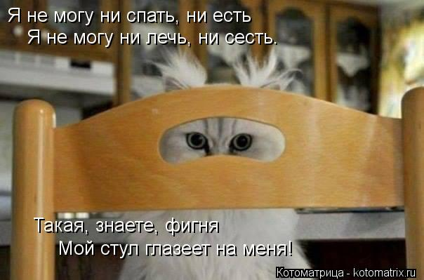 Котоматрица: Я не могу ни спать, ни есть Я не могу ни лечь, ни сесть.  Мой стул глазеет на меня!   Такая, знаете, фигня
