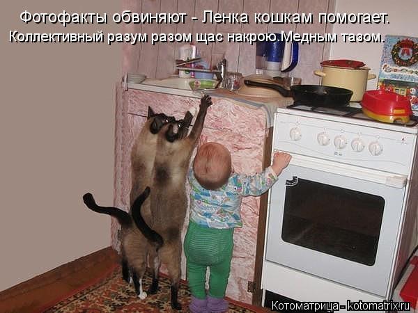 Котоматрица: Фотофакты обвиняют - Ленка кошкам помогает. Коллективный разум разом щас накрою.Медным тазом.