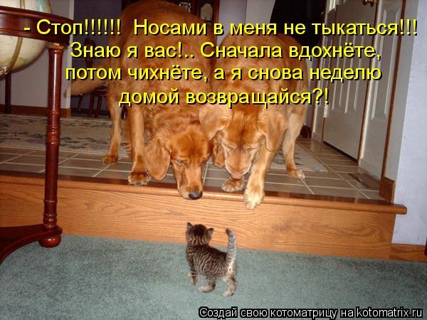 Котоматрица: - Стоп!!!!!!  Носами в меня не тыкаться!!! Знаю я вас!.. Сначала вдохнёте, потом чихнёте, а я снова неделю  домой возвращайся?!