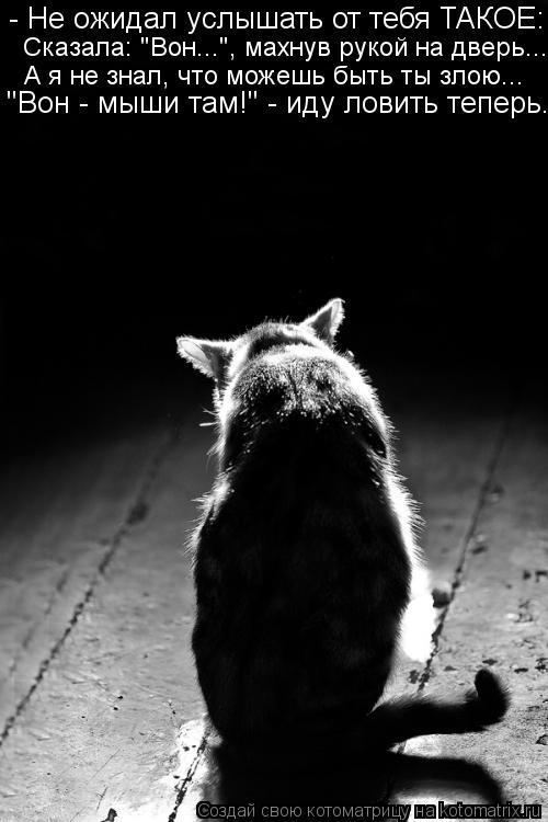 """Котоматрица: - Не ожидал услышать от тебя ТАКОЕ: Сказала: """"Вон..."""", махнув рукой на дверь... А я не знал, что можешь быть ты злою... """"Вон - мыши там!"""" - иду ловить т"""
