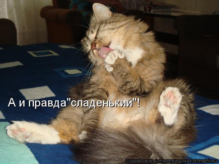 """Котоматрица: А и правда""""сладенький""""!"""