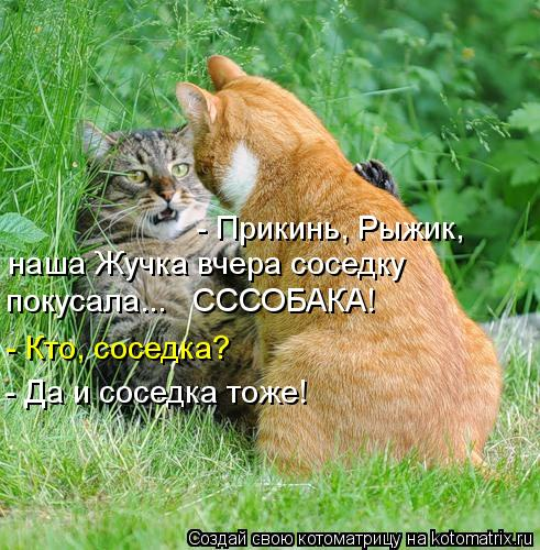 Котоматрица: - Прикинь, Рыжик, наша Жучка вчера соседку покусала...   СССОБАКА! - Кто, соседка? - Да и соседка тоже!