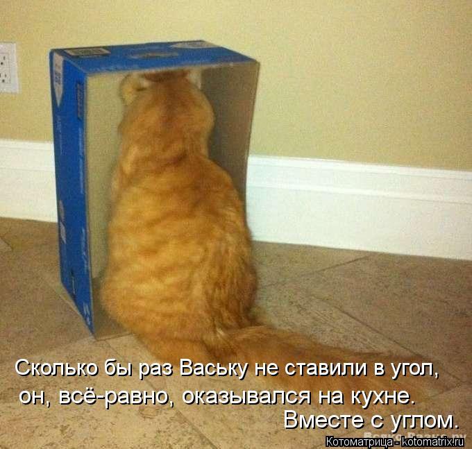 Котоматрица: Вместе с углом. Сколько бы раз Ваську не ставили в угол, он, всё-равно, оказывался на кухне.