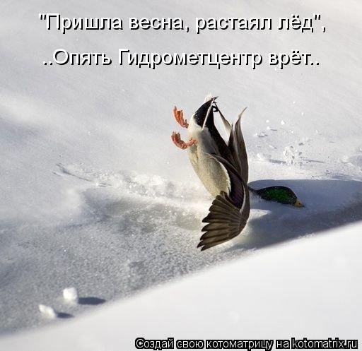 """Котоматрица: ..Опять Гидрометцентр врёт.. """"Пришла весна, растаял лёд"""","""