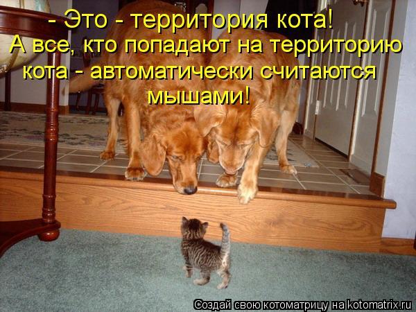 Котоматрица: - Это - территория кота! А все, кто попадают на территорию кота - автоматически считаются мышами!