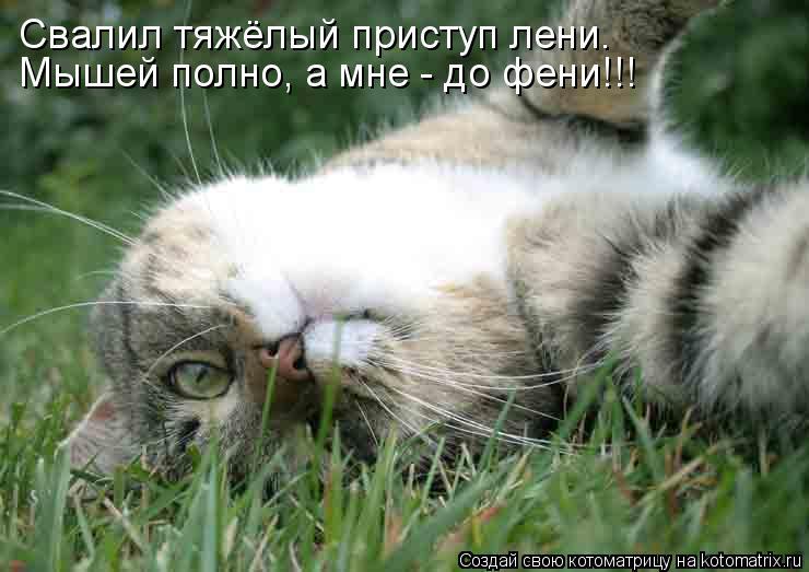 Котоматрица: Мышей полно, а мне - до фени!!! Свалил тяжёлый приступ лени.