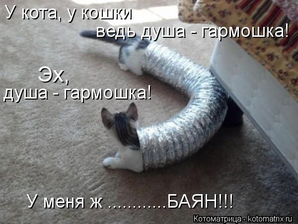 Котоматрица: У кота, у кошки ведь душа - гармошка! Эх, душа - гармошка! У меня ж ............БАЯН!!!