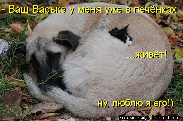 Котоматрица: - Ваш Васька у меня уже в печёнках ...живёт! ну, люблю я его!)