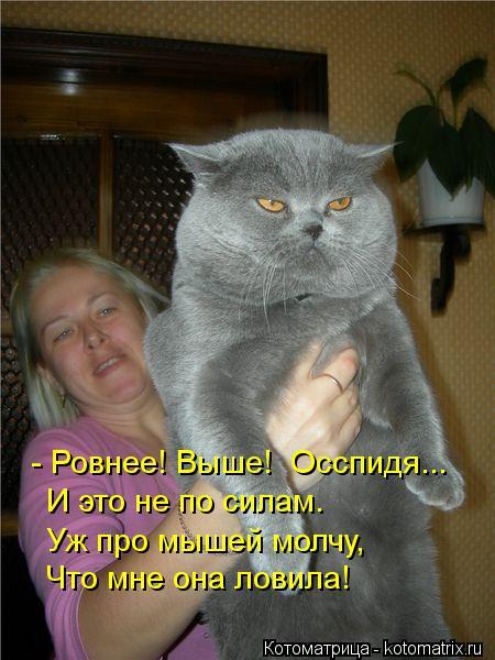 Котоматрица: - Ровнее! Выше!  Осспидя... И это не по силам. Уж про мышей молчу,  Что мне она ловила!