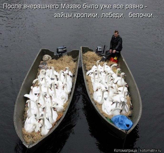 Котоматрица: После вчерашнего Мазаю было уже все равно - зайцы,кролики, лебеди,  белочки...