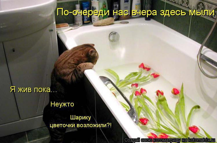 Котоматрица: Я жив пока... Неужто  Шарику  По-очереди нас вчера здесь мыли цветочки возложили?!