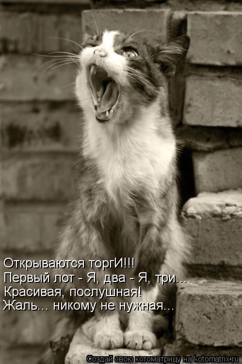 Котоматрица: Открываются торгИ!!! Первый лот - Я, два - Я, три... Красивая, послушная! Жаль... никому не нужная...