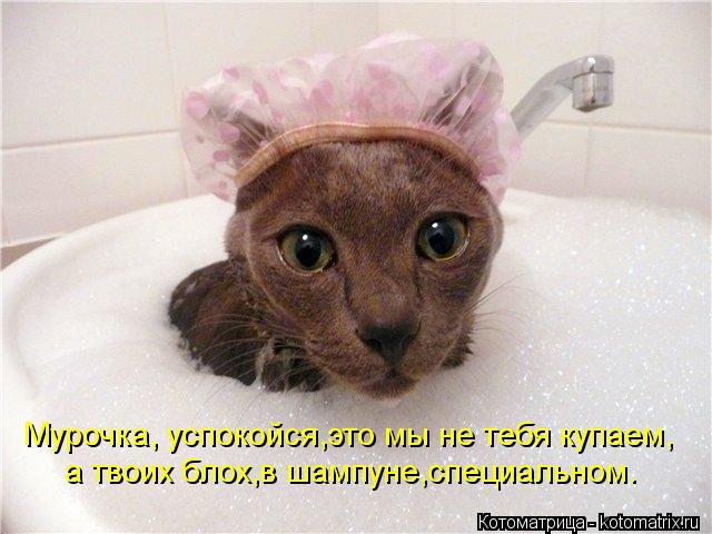 Котоматрица: Мурочка, успокойся,это мы не тебя купаем, а твоих блох,в шампуне,специальном.
