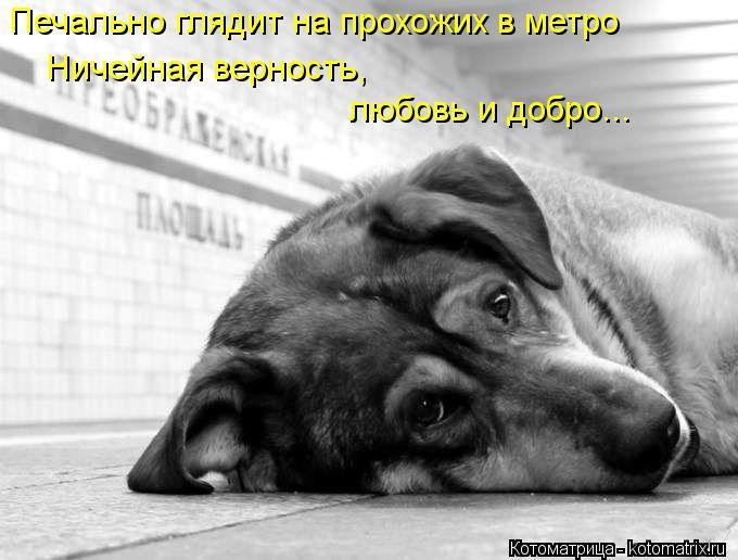 Котоматрица: Печально глядит на прохожих в метро Ничейная верность,  любовь и добро...