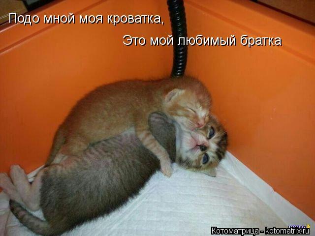 Котоматрица: Подо мной моя кроватка, Это мой любимый братка