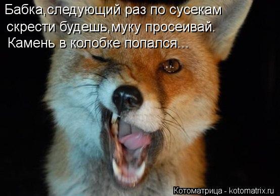 kotomatritsa_EC.jpg