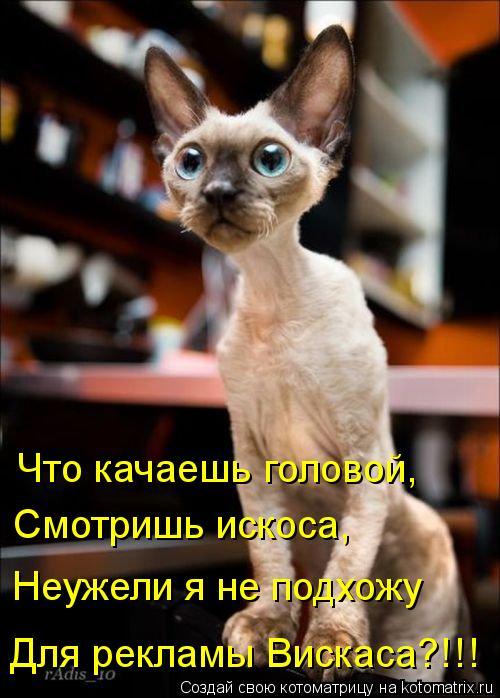 kotomatritsa_s5.jpg