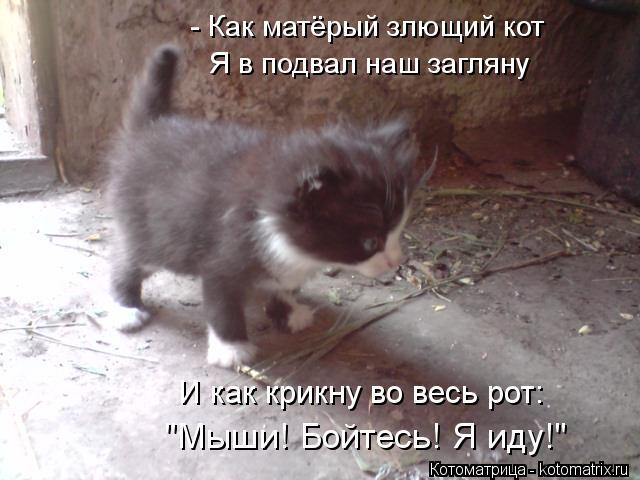 """Котоматрица: - Как матёрый злющий кот """"Мыши! Бойтесь! Я иду!"""" Я в подвал наш загляну И как крикну во весь рот:"""