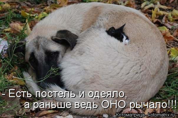 Котоматрица: - Есть постель и одеяло, а раньше ведь ОНО рычало!!!