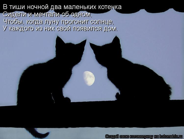 Котоматрица: В тиши ночной два маленьких котенка Сидели и мечтали об одном, Чтобы, когда луну прогонит солнце, У каждого из них свой появился дом.