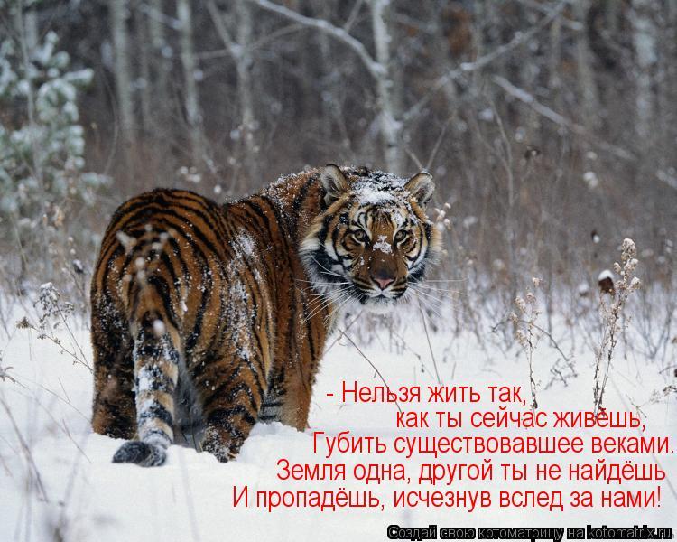 Котоматрица: - Нельзя жить так,  как ты сейчас живёшь, Губить существовавшее веками. Земля одна, другой ты не найдёшь И пропадёшь, исчезнув вслед за нами!