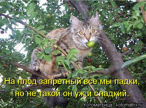 Котоматрица: На плод запретный все мы падки, но не такой он уж и сладкий.