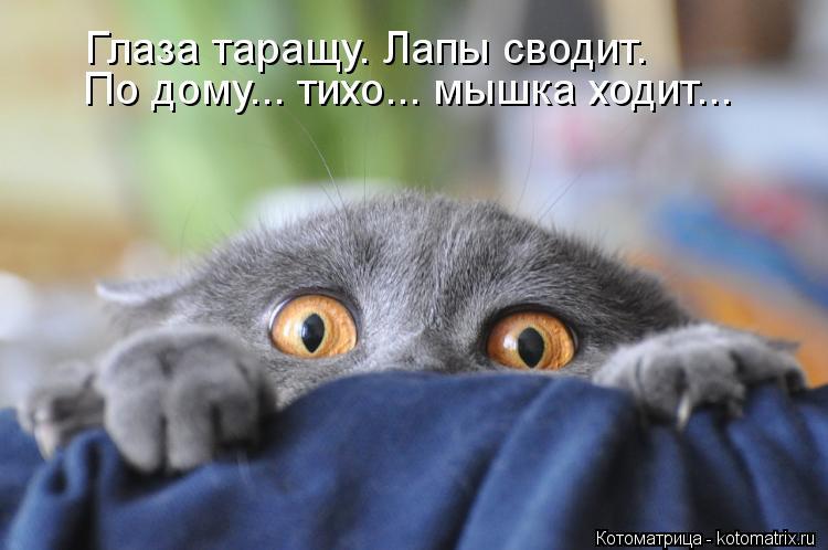 Котоматрица: По дому... тихо... мышка ходит...  Глаза таращу. Лапы сводит.