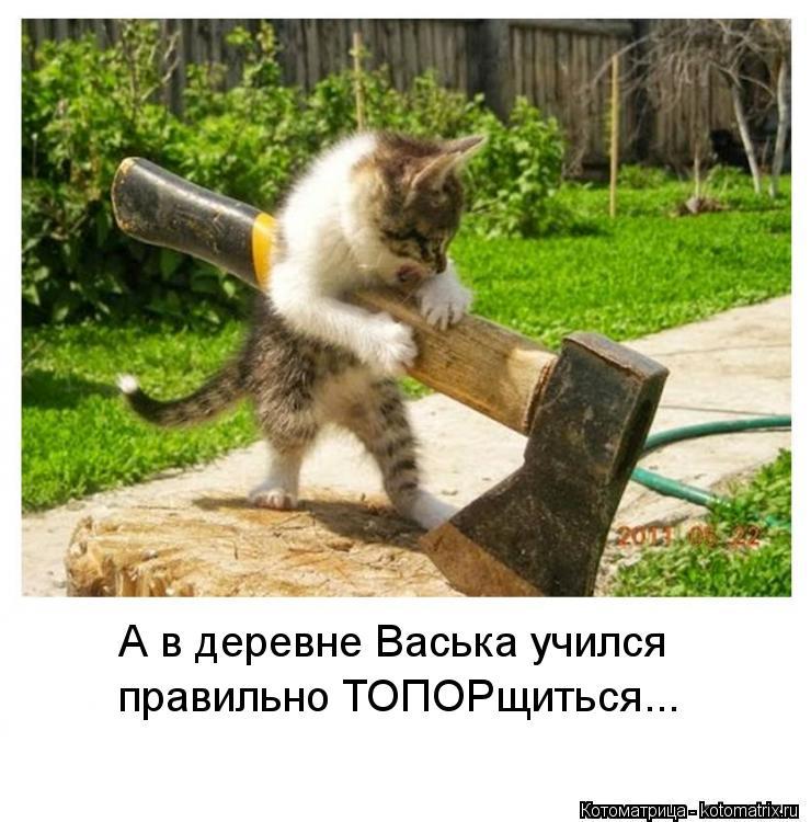 Котоматрица: А в деревне Васька учился правильно ТОПОРщиться...